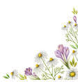 watercolor card of chamomile flowers vector image