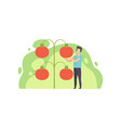 young man standing next to giant growing tomatoes vector image vector image
