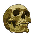 anatomy realistic skull art vector image vector image