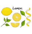 collection of hand drawn elements yellow lemon vector image vector image