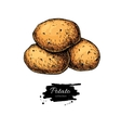 Potato drawing Isolated hand drawn vector image vector image