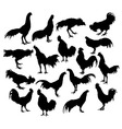 Silhouette of a variety of actions cock fighter vector image vector image