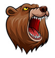 wild bear head mascot vector image vector image