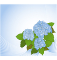 Background with hydrangea vector | Price: 1 Credit (USD $1)