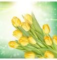 Bunch of fresh yellow tulips EPS 10 vector image vector image