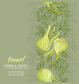 fennel background vector image vector image