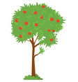 picking apple green tree with ripe product vector image vector image