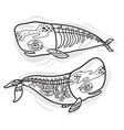 floral anatomy whales in outline vector image vector image
