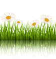 Green grass lawn with white chamomiles and vector image