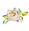 original watercolor painting of pink rose isolated vector image vector image
