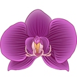 Bud of an Orchid vector image