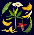 cartoon set of sweet yellow bananas green leaves vector image
