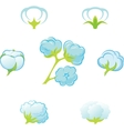 Cotton Gossypium vector image