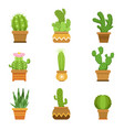 decorative cactus in pots set desert vector image