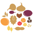 Dried Fruit vector image vector image