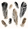 watercolor feathers set on white background vector image vector image