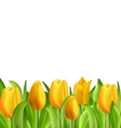 Beautiful Flowers Tulips Isolated vector image vector image