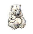 polar bear with cub from a splash watercolor vector image vector image