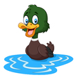Cartoon ducks floats on water vector image vector image
