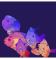 Colorful Greeting Card with Fish vector image