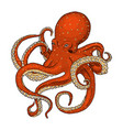 sea creature octopus engraved hand drawn in old vector image vector image