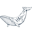 with whale nautical hand vector image vector image