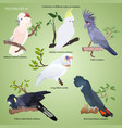 collection of different types of realistic parrot vector image vector image