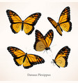monarch art in several different views vector image vector image