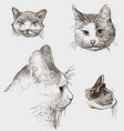 sketches cats heads vector image vector image
