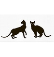 silhouettes of two oriental cats vector image