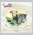 cow in frame from splash milk against