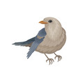 pigeon with blue-gray plumage winter bird with vector image