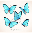 set morpho in five different views vector image vector image
