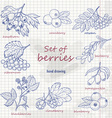 Set of forest berries on paper vector image vector image