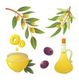 set olives fruit olive oil bottle branch tree vector image vector image