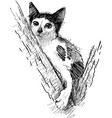 spotted kitten on a tree vector image vector image