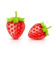 Strawberry red ripe fruits vector image