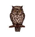 owl bird isolated sketch icon vector image