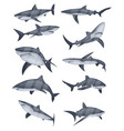 set of shark icons vector image