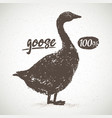 silhouette goose for light background with vector image vector image