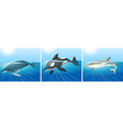 Whale and shark in the ocean vector image