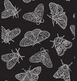 white contour butterflies and moths isolated vector image