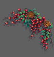 bunch of mountain ash with leaves branches and vector image