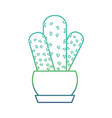 isolated cactus design vector image vector image