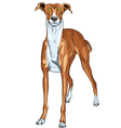 Surprised dog breed greyhound