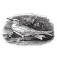 white tern vintage vector image vector image