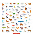 animals north america collection vector image vector image