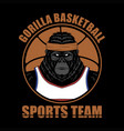 gorilla basketball vector image