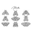 ink butterflies and moths collection hand drawn vector image