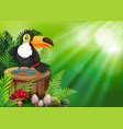 toucan on nature green background vector image vector image